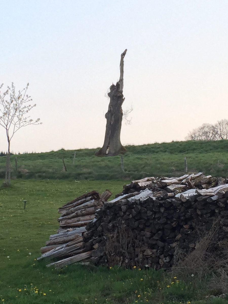 Einsames Holz - Henvelez (Belgien, Mai 2017) (c) Steffen Bürger