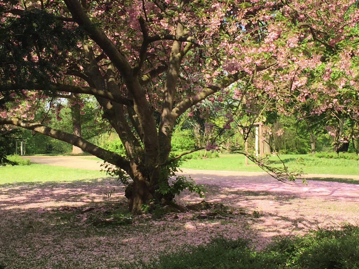 Erste Blüten - (c) Foto: Steffen Bürger (23.04.2018)